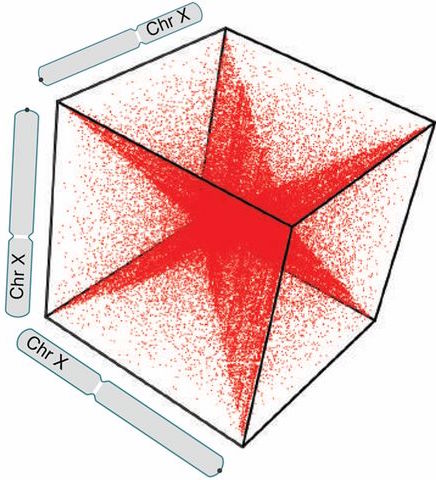 Contact triples visualized as a 3D contact tensor. Details of chromosome organization are seen inside this tensor as n-dimensional shapes. Here, the bright diagonal seen in 2D contact matrices naturally creates an n-dimensional hyperstar. / Credit: PNAS Darrow et al