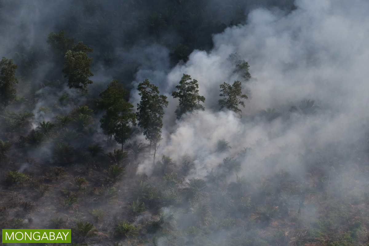 A peatland planted with oil palm burns in Indonesia's Sumatra in 2015. The giant island's vast peat zones have been widely drained and planted with oil palm and pulpwood trees, but the dried peat is especially prone to catching fire, especially when growers slash-and-burn to clear it cheaply. The practice is illegal in Indonesia for all except the smallest farmers, though companies routinely employ it, often with the tacit consent of corrupt officials. Photo by Rhett A. Butler/Mongabay