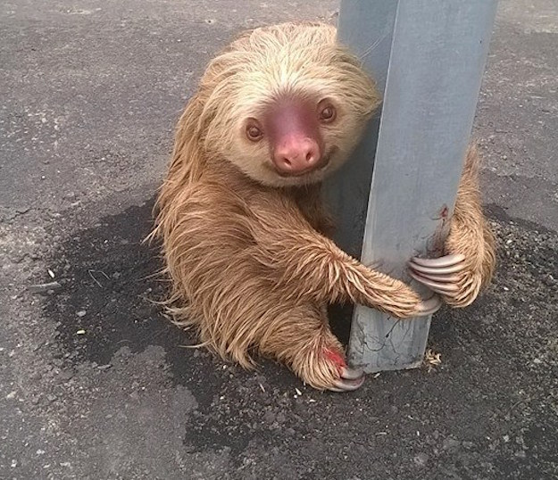 A sloth has been rescued from a highway by CET officials.