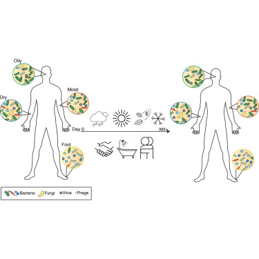 Individual differences and the environment shape the structural and functional composition of the human skin microbiome.