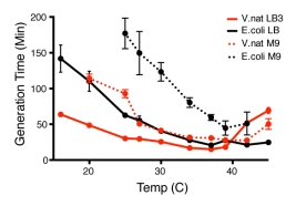 Growth measurements of E. coli and V. natriegens grown across a range of temperatures. Image: bioRxiv