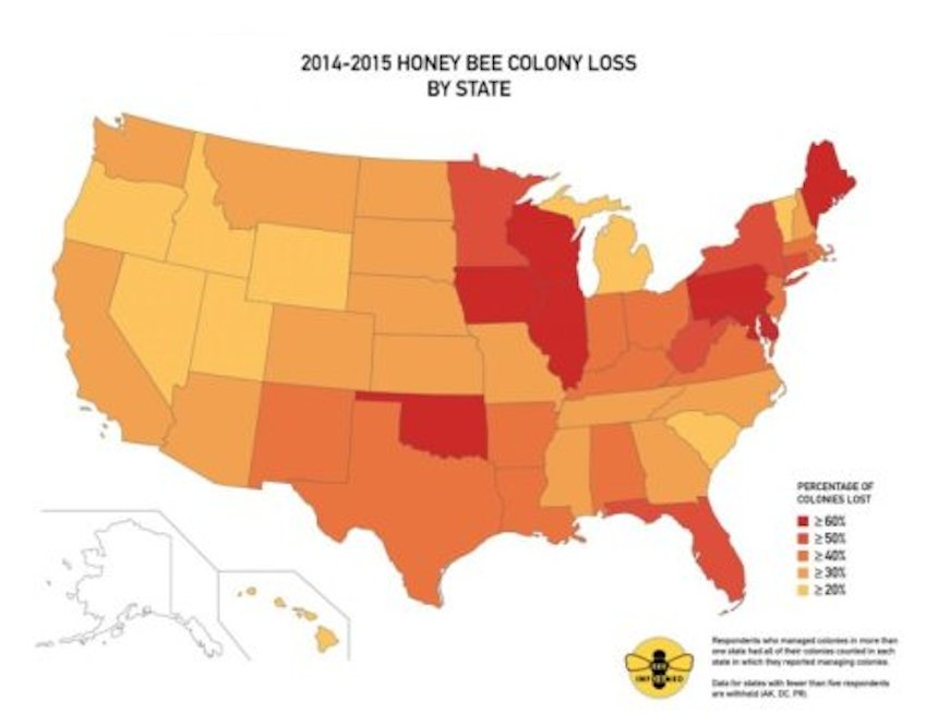 The darker areas represent greater colony loss by state.