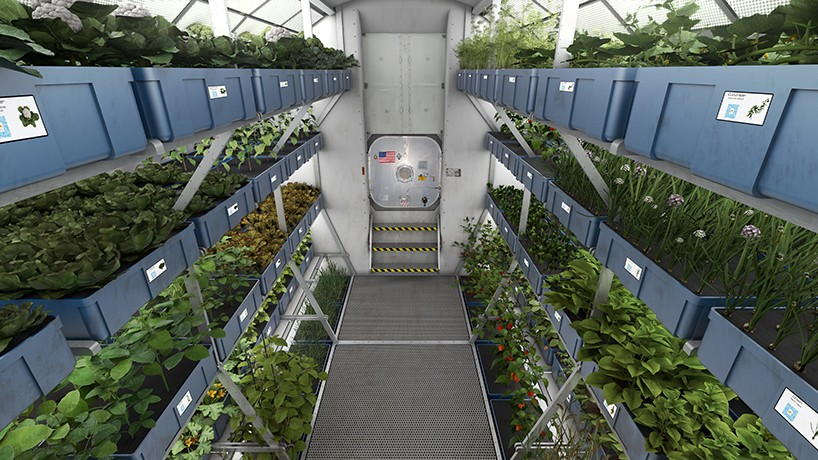 Plants growing on the ISS