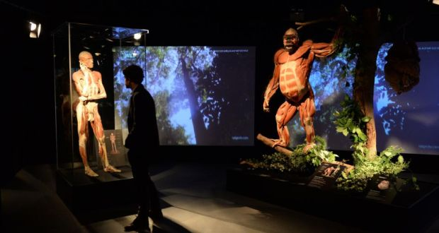 Anatomical animal exhibit opens at the Ambassador Theater in Dublin