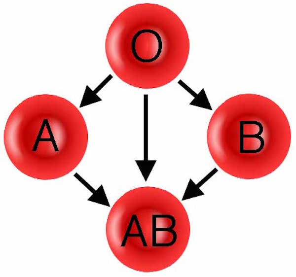 Donation pathway for ABO blood groups.