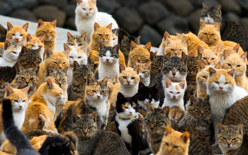 Cats gather at the harbor of Aoshima Island
