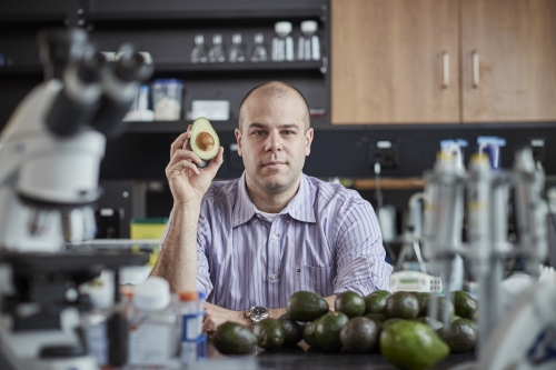 Professor Paul Spagnuolo has researched a compound found in avocados that attacks leukemia stem cells