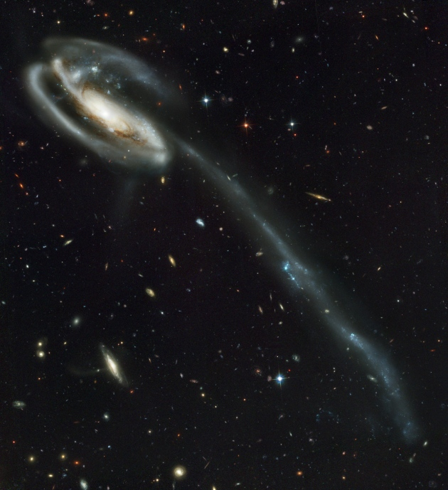 The Tadpole Galaxy, taken by the Hubble Space Telescope