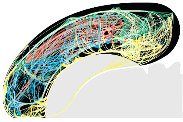A color-coded flat map of 1,923 rat cortical association macroconnections (