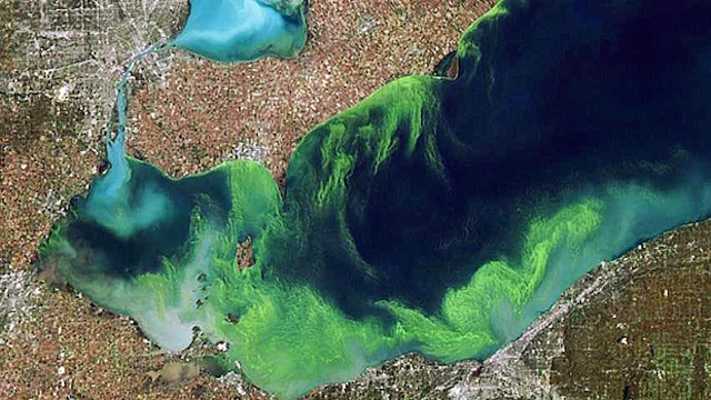 An areal shot of the blue-green algae bloom in Lake Erie this summer