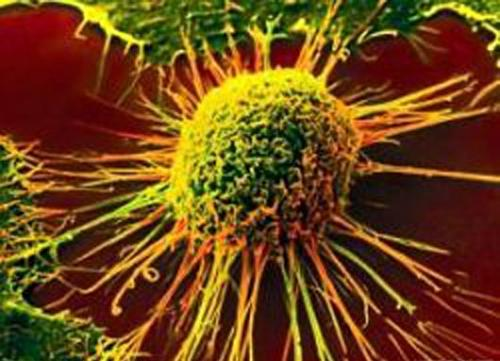 What is the status of immunotherapy?