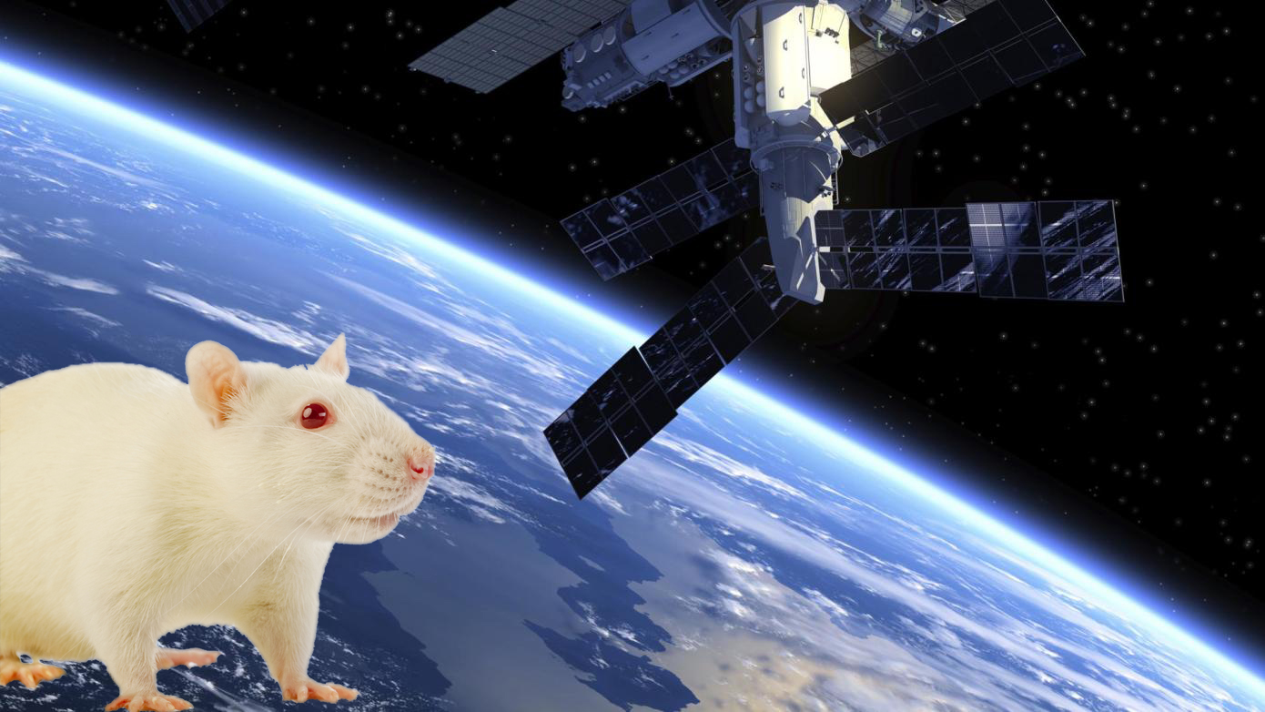 Lab mice were taken to space for three months to test for any changes in the skin.