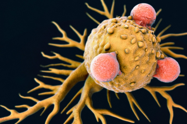 T Lymphocytes on a Cancer Cell