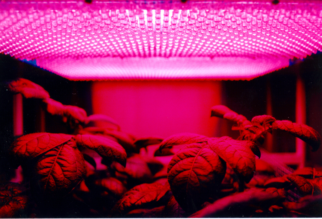 Red and blue light can increase plant growth
