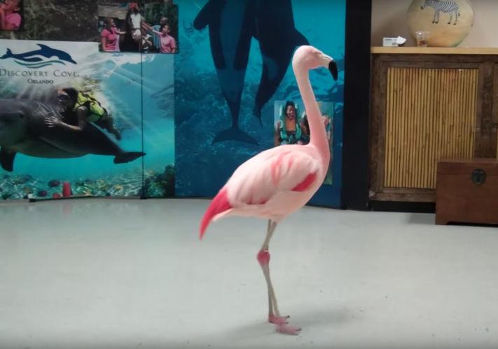 R.I.P. Pinky the flamingo.