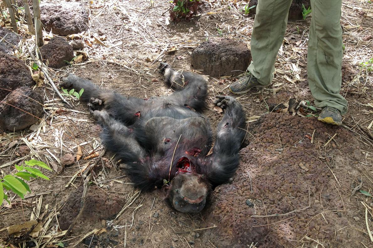 A graphic image of Foudouko's mauled body after the incident.