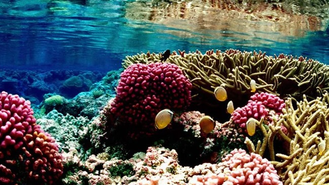 The Pacific Remote Islands Marine National Monument. Photo: The Pew Charitable Trusts