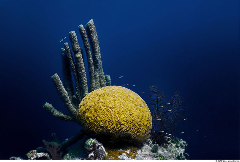 Brain and tube corals of the Great Blue Hole in Belize. Photo by jeyhem. Source: Wikimedia Commons