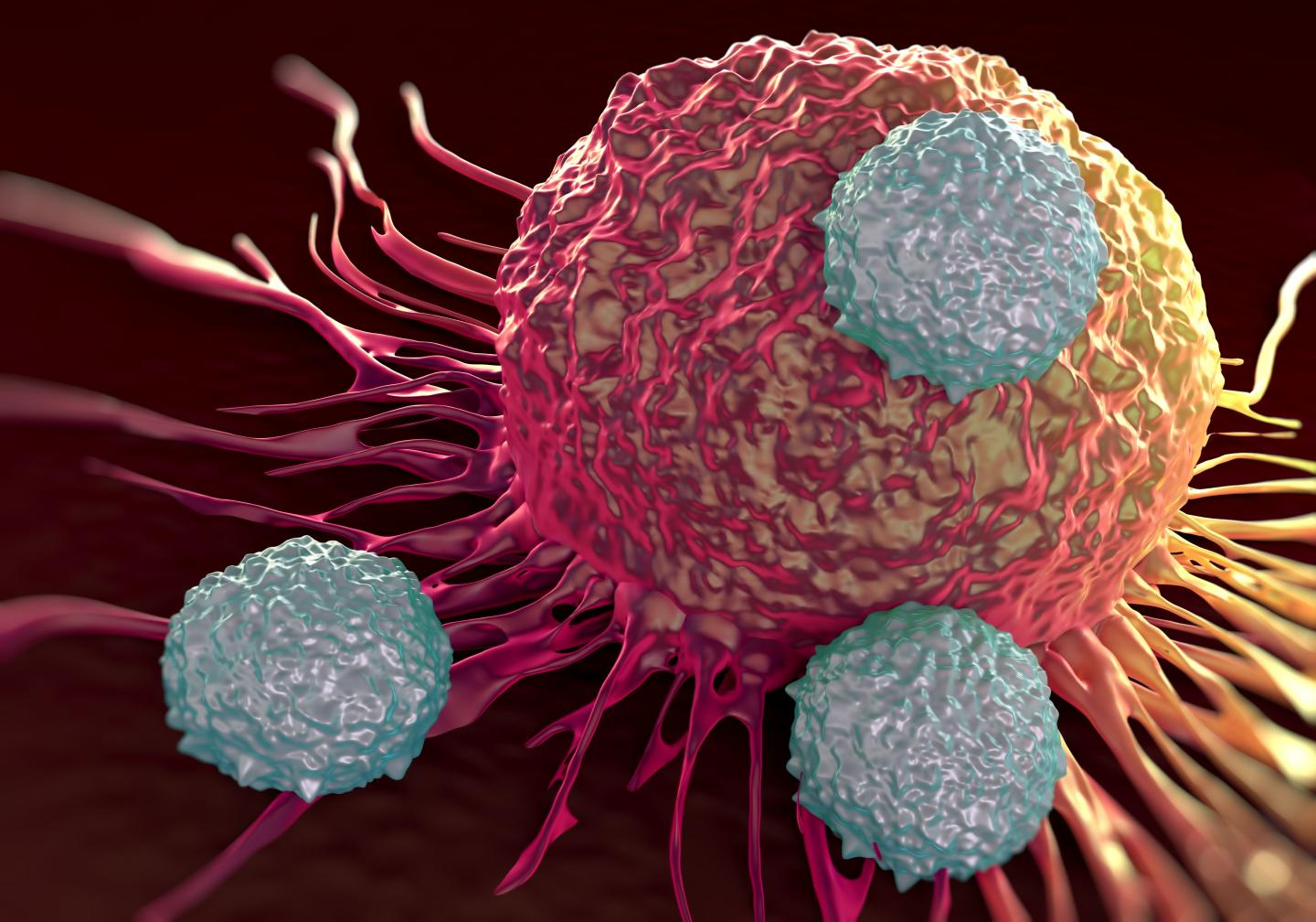 T cells (shown in gray) attacking cancer cells.
