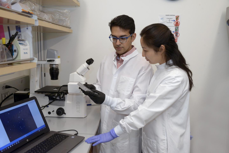 Dr. Neville Sanjana and a lab team member. Credit: New York Genome Center