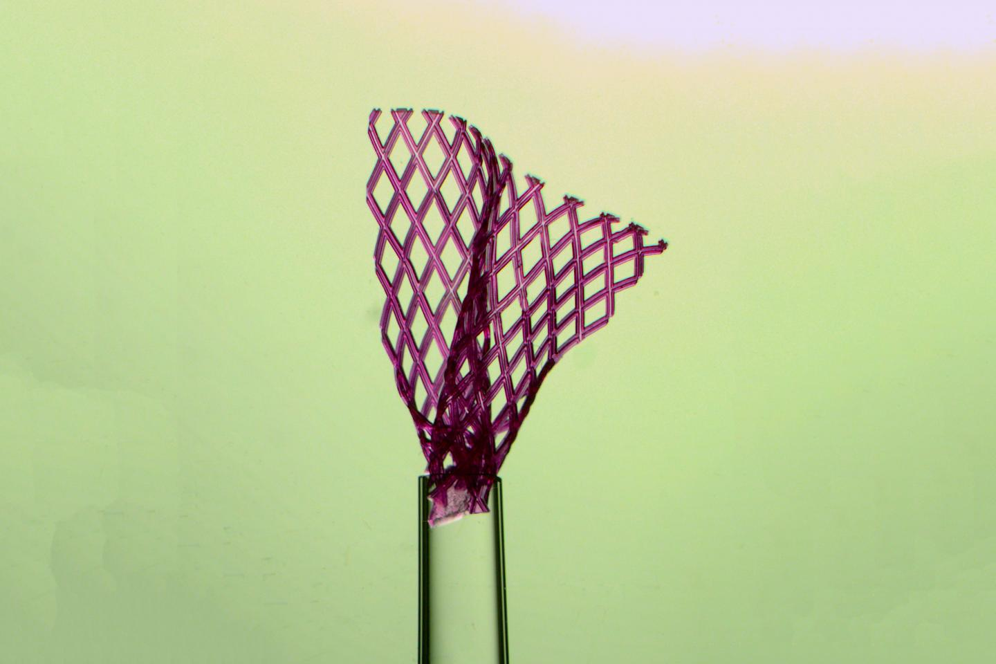 The flexible tissue scaffold, shown here emerging from a glass pipette with a tip one millimetre wide, unfolds itself after injection into the body. This could enable surgeons to use minimally invasive techniques, which reduce recovery time, scarring and other negative effects. Credit: Miles Montgomery and Rick Lu