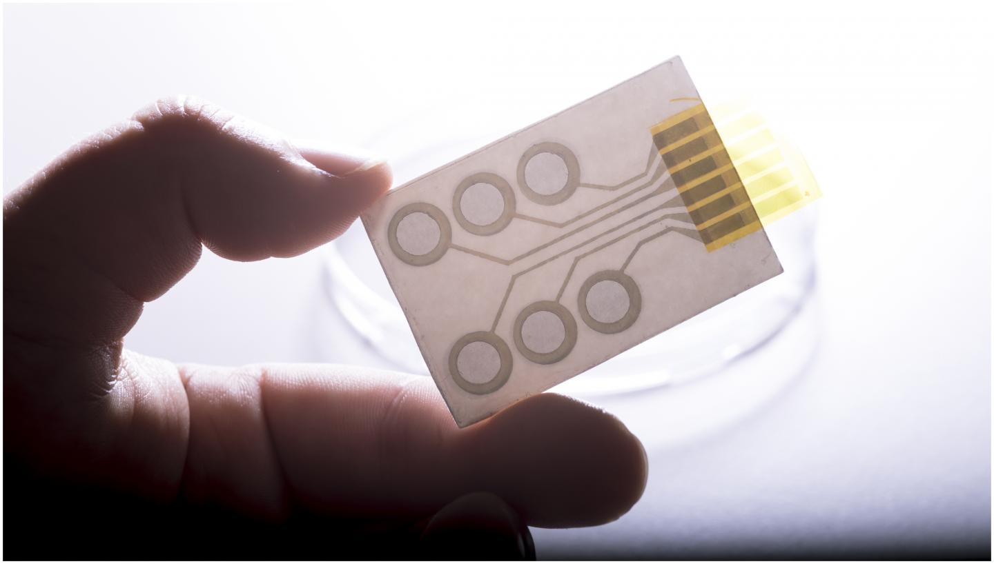 Conductive polymers printed on standard decal paper form the tattoo electrodes for long-term monitoring of electrical impulses of heart or muscles. Credit: © Lunghammer - TU Graz