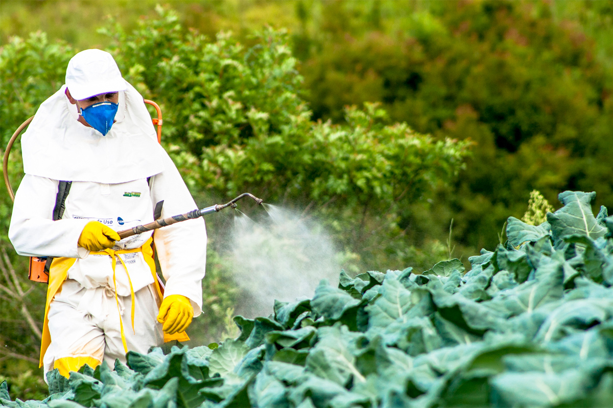 the impact of the pesticides on the reproductive health in men Reproductive toxicology of pesticides: non-pesticide endocrine disrupters and reproductive health (pcbs)/ impact of bisphenol a on fertility problems in men.