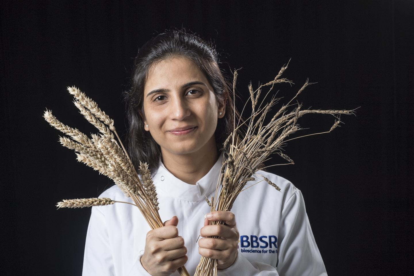 John Innes Centre researcher Dr. Sanu Arora with domesticated wheat one of its wild relatives. / Credit: Andrew Davis
