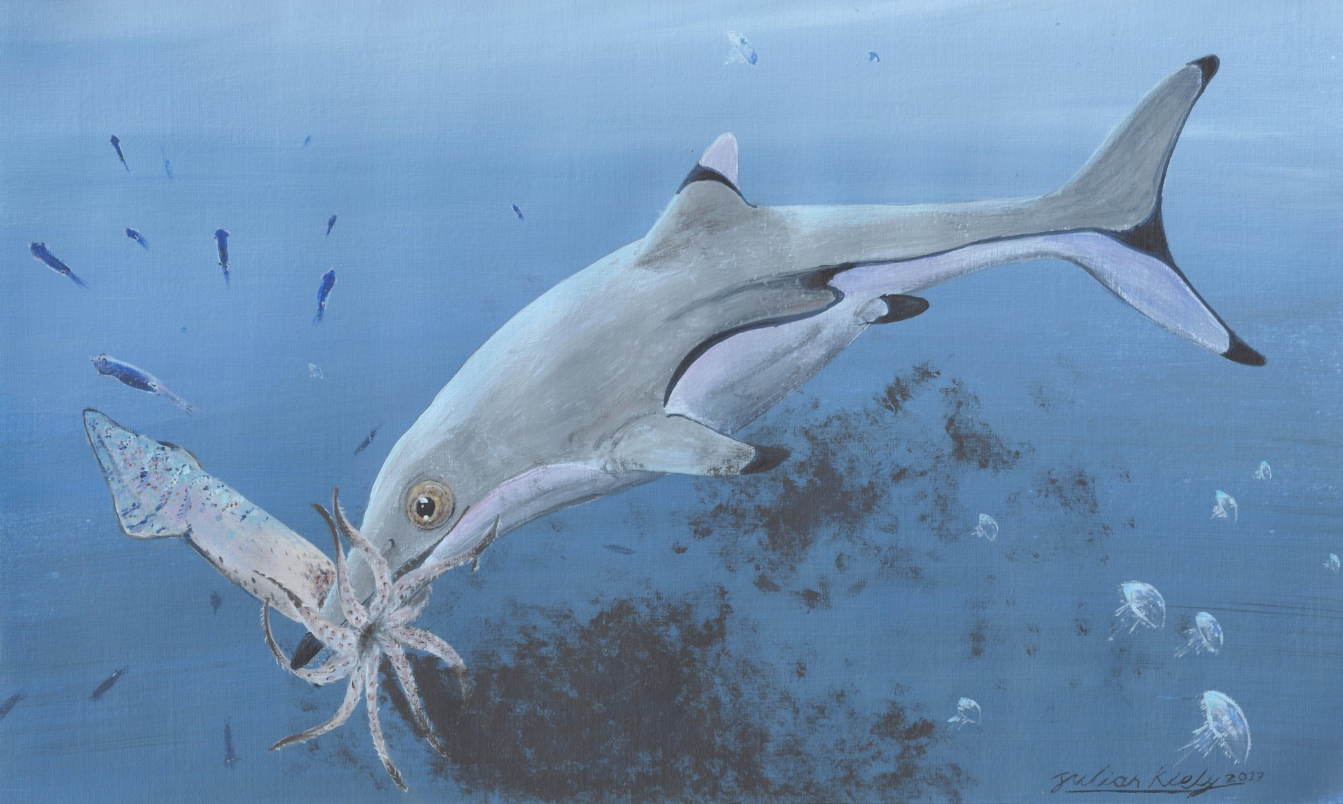 An artist's impression of an ichthyosaur munching on a squid.