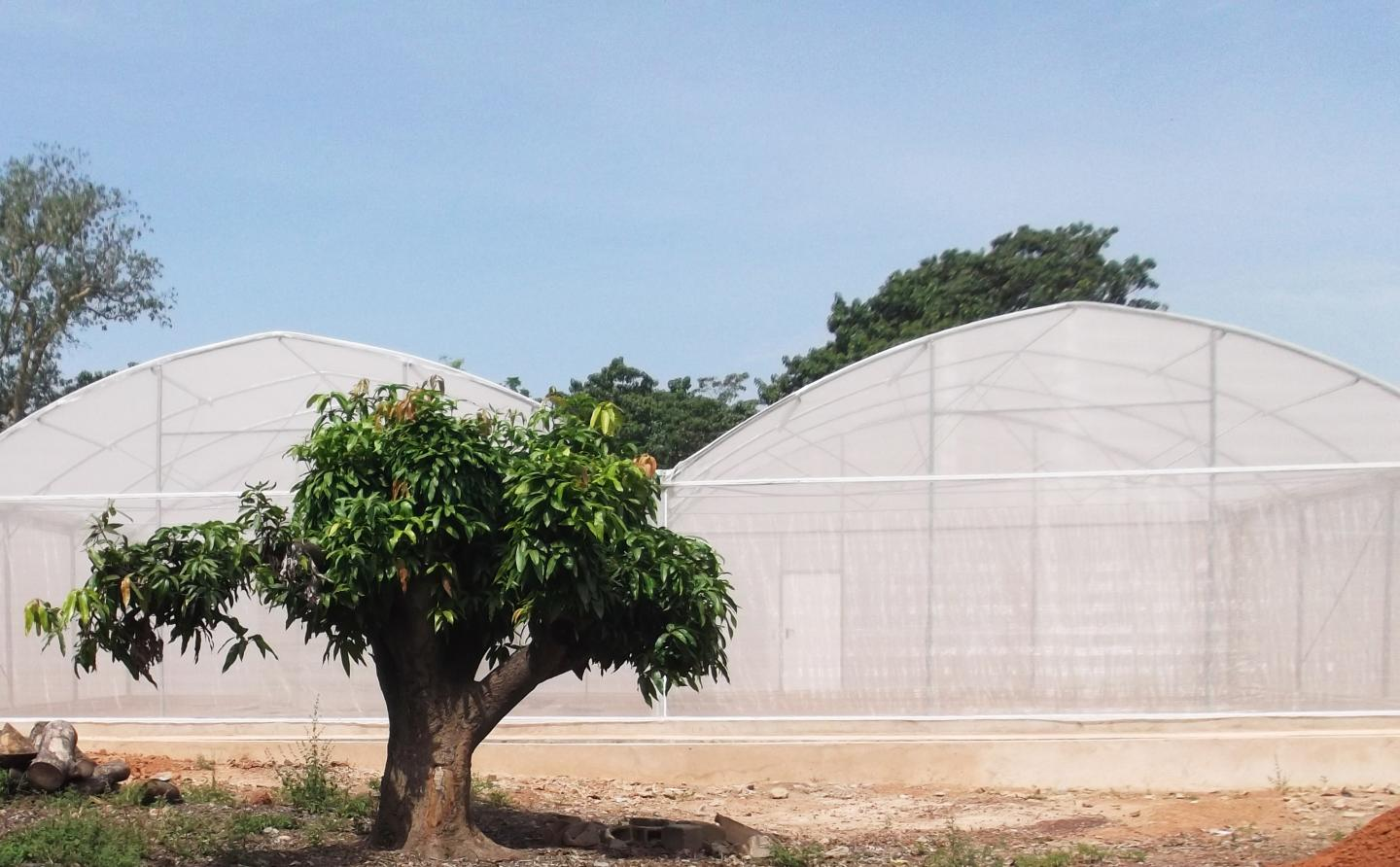 MosquitoSphere, a roughly 6,550-square-foot, screened-in structure in Burkina Faso, West Africa, was designed to simulate a village setting and included plants, huts, small pools of water and a food source for mosquitoes. / Credit: Etienne Bilgo