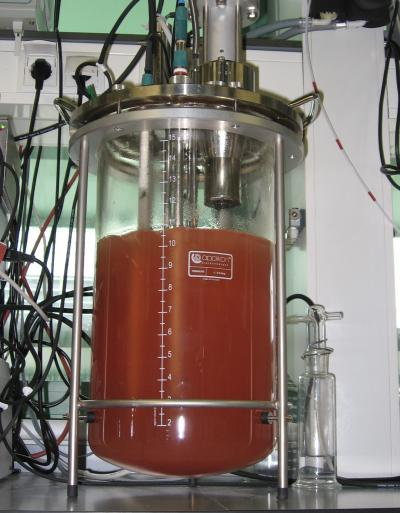 An anammox culture is in a membrane bioreactor. The red color is due to the heme c group of the protein cytochrome c that plays an important role in the anammox metabolism. / Credit: B. Kartal