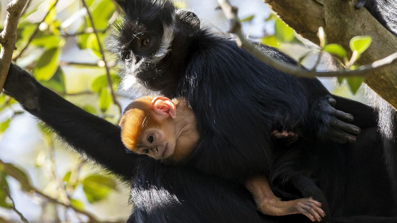 The mother holds her newborn at Targona Zoo.