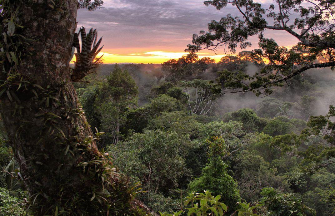 Yasuní National Park. Photo: Smithsonian Magazine via Flickr user sara y tzunki