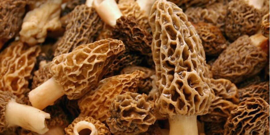 Pan-fried Morel Mushrooms