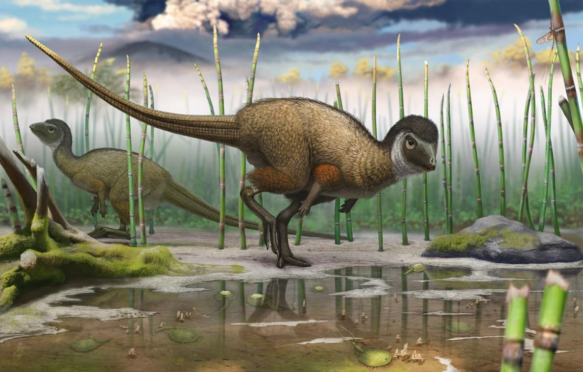 Dinosaurs may have been more bird-like than originally thought; not only in looks, but perhaps even with sounds.