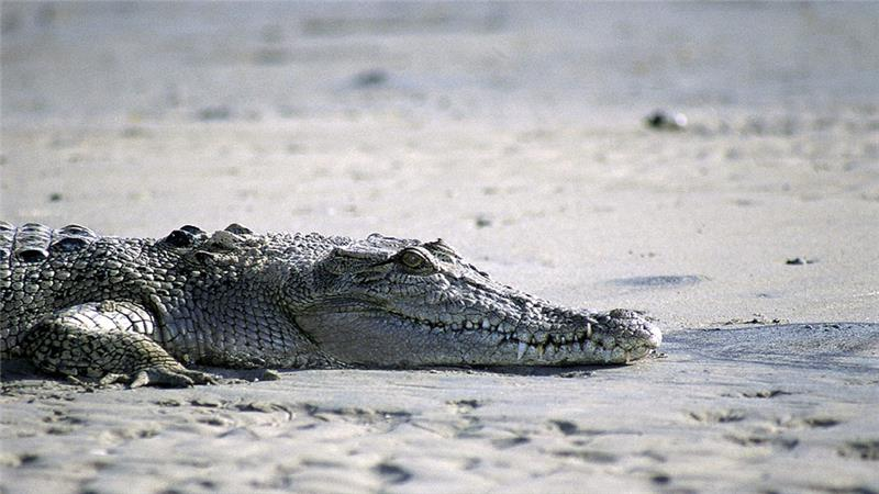 A crocodile has reportedly claimed a woman's life in Australia after she has went swimming despite warning signs saying not to.