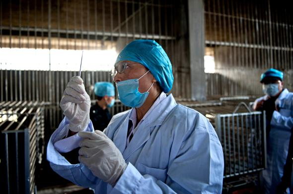A worker prepares to drain the bile from a bear at a farm in China, which has more such facilities than any other country.