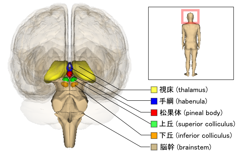 Small Brain Region Found to Function Abnormally in Depressio