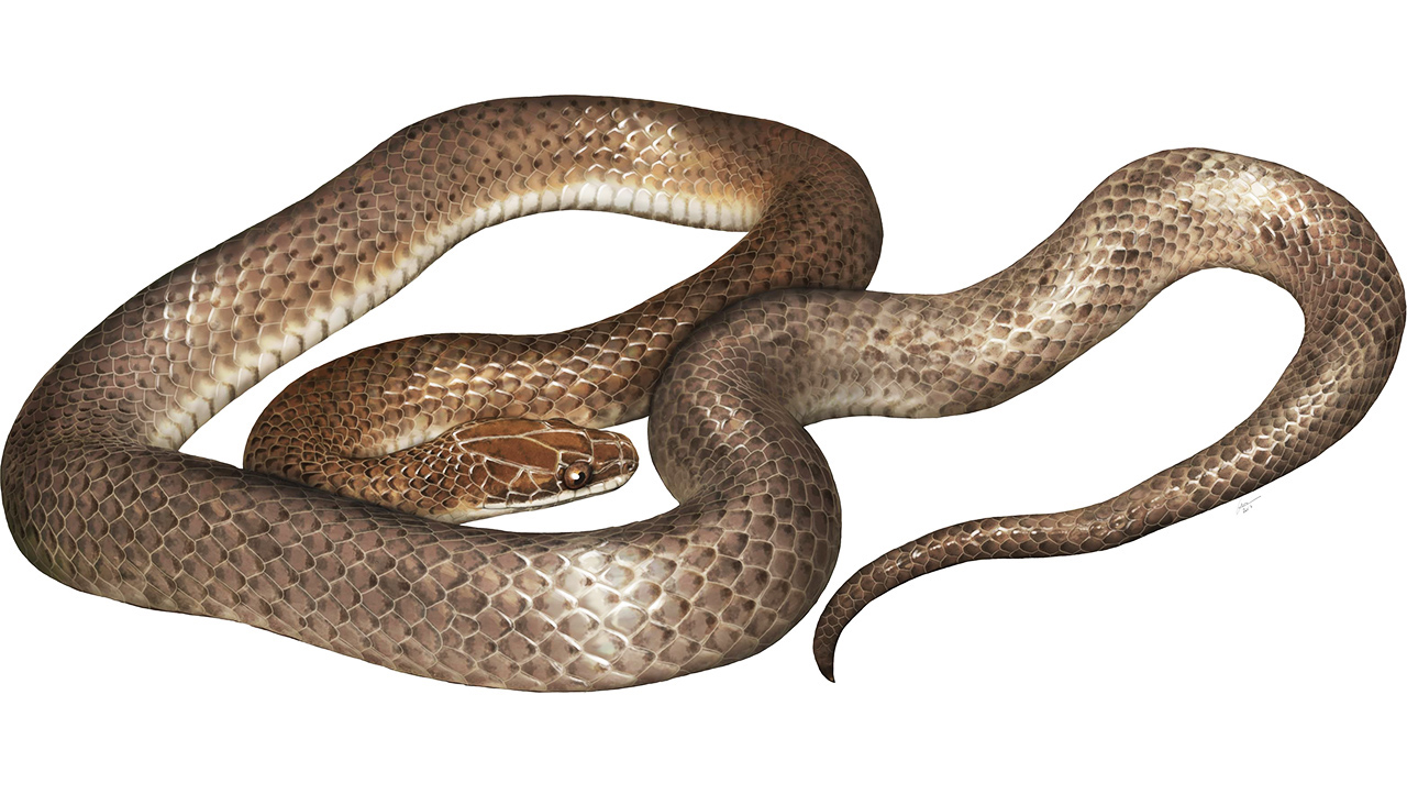 An artist's impression of the new species.
