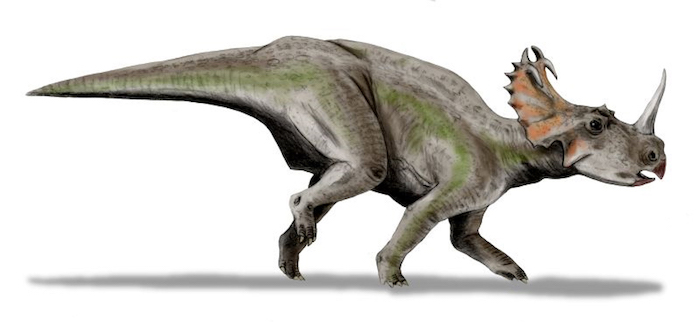Centrosaurus apertus / Credit: Wikimedia Commons/ Nobu Tamura (http://spinops.blogspot.com)