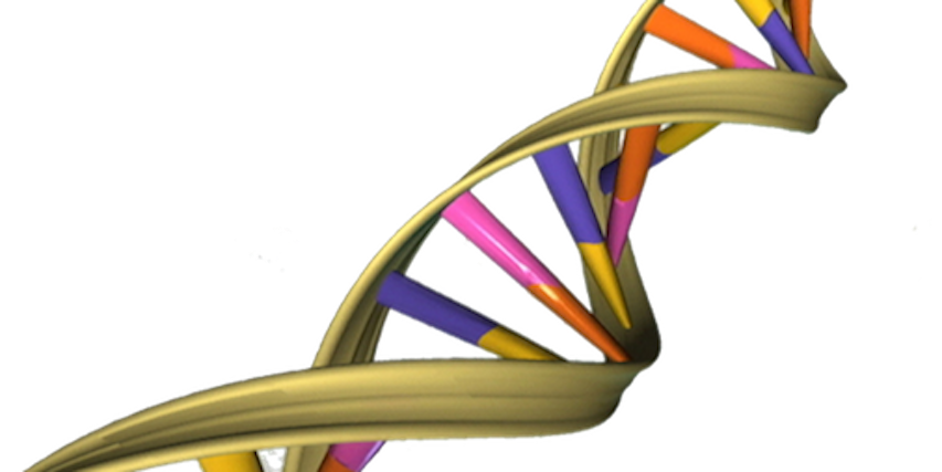 Scientists want to get a handle on gene expression by manipulating RNA / Credit: Wikimedia Commons/ National Human Genome Research Institute