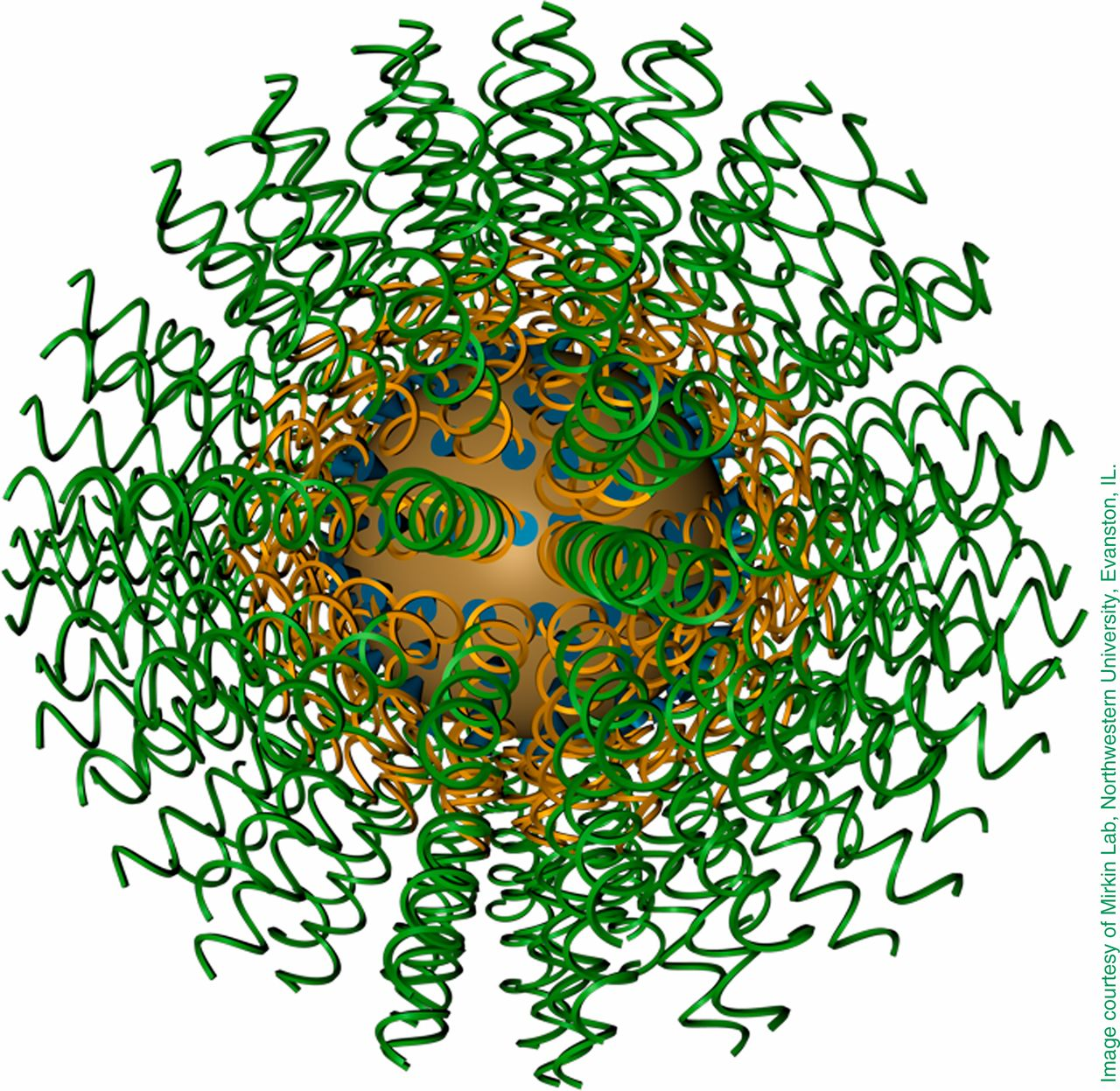 Spherical gold nucleic acid nanoparticle. Source: PNAS