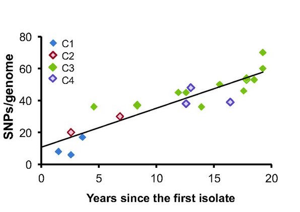 Number of SNPs distinguishing each isolate from the first (BM1) over time. Line of best fit with a slope of 2.4 mutations per year is shown.