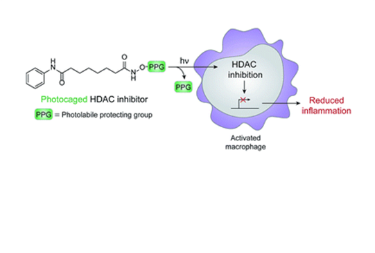 The HDAC inhibition reaction (Parasar and Chang, 2016)