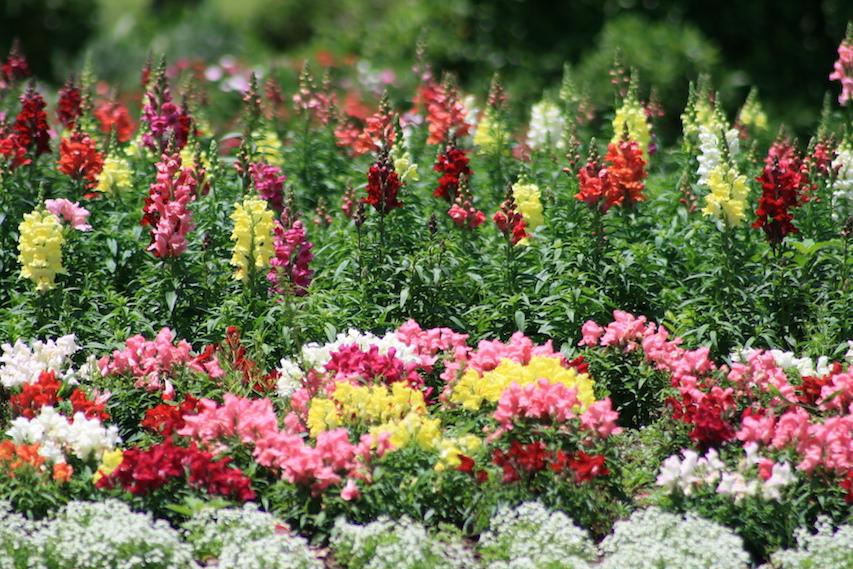 Flowers - Brisbane, Australia / Credit: Carmen Leitch