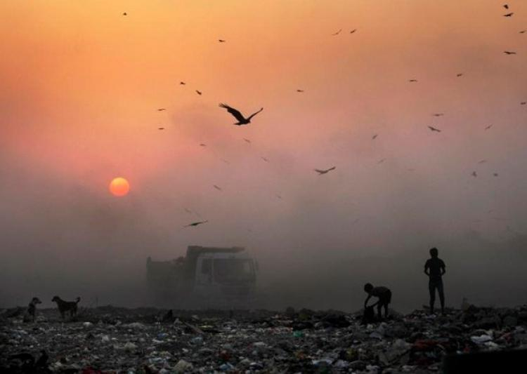 We know how horrible air pollution is for humans. But do we know what it does to birds? Photo: India TV