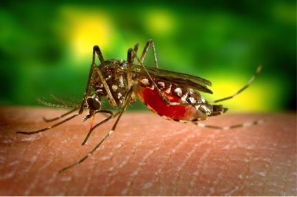 Mosquito-borne disease affecting millions has had no approved vaccine until now
