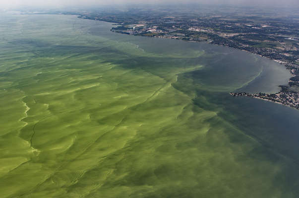 An aerial shot of Lake Erie under attack by an algal bloom. Photo: Alliance for the Great Lakes