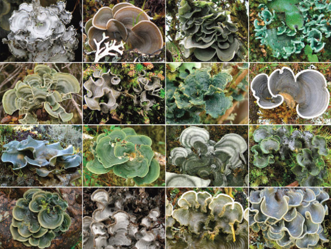Lichens are composite organisms.