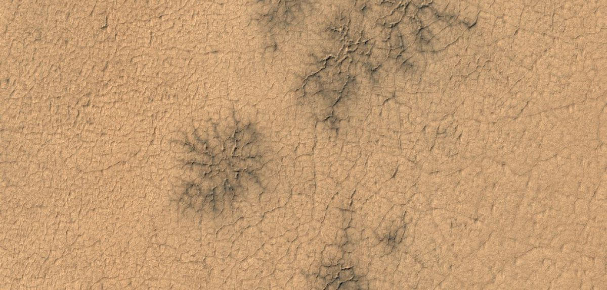 These spider-like cracks in the Martian surface are known as araneiforms.